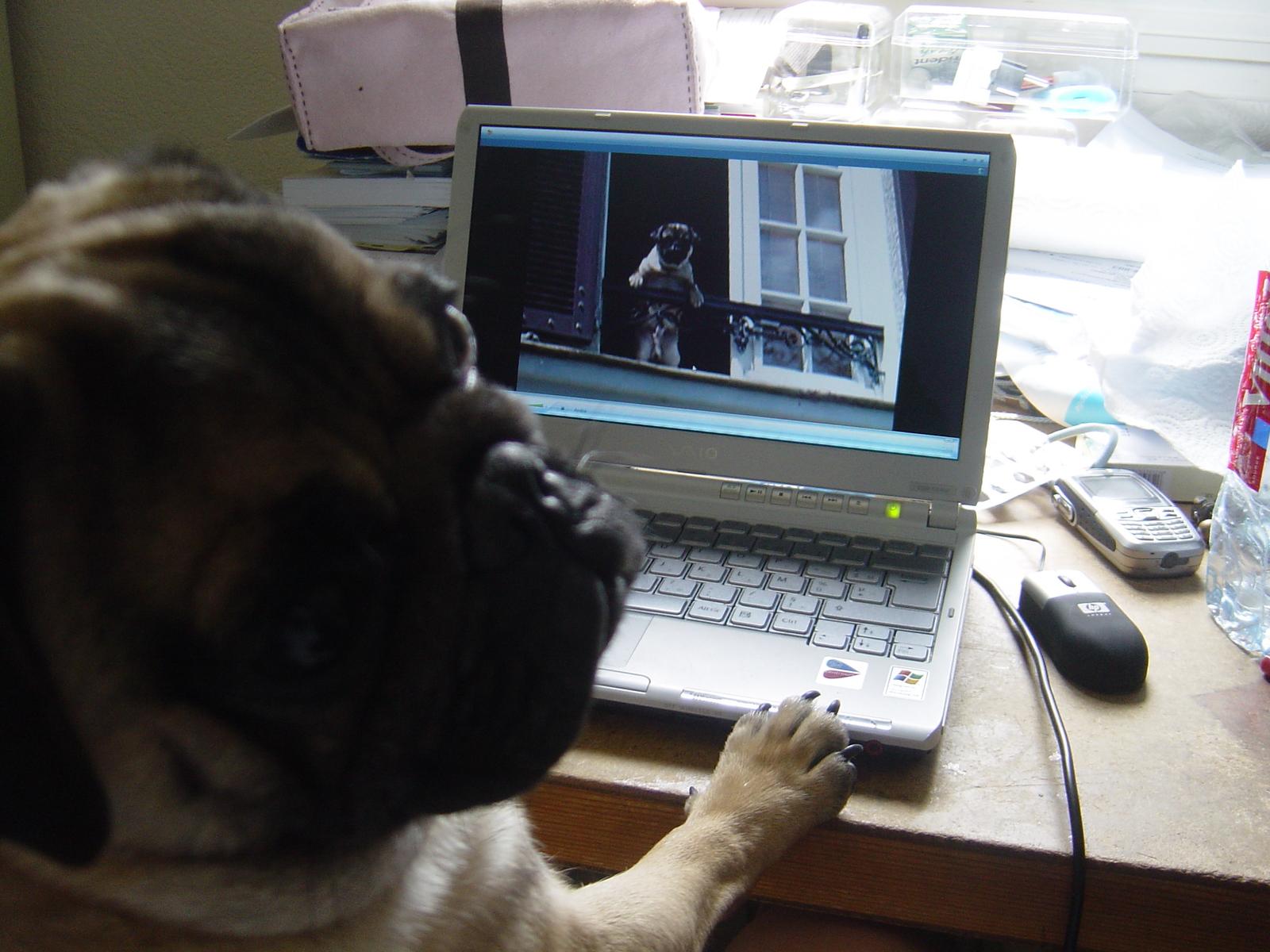 Dog at the Desk
